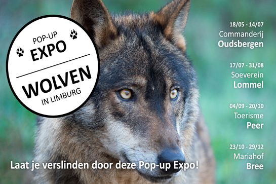 Pop-up expo wolven in limburg